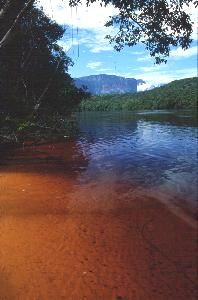 The River of Gold?  No, the tannin-stained Rio Carrao on the way to Angel Falls